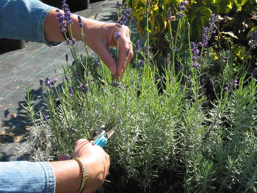 Vzdrževanje vrta