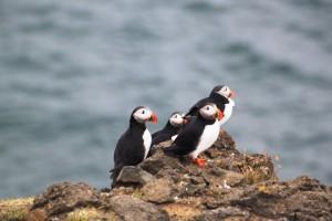 naravne lepote Islandije