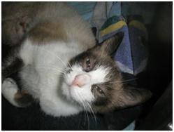 Kastracije in sterilizacije psov in mačk