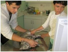 Operacije psov in mačk
