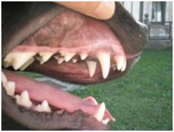 Zobna klinika za pse in mačke