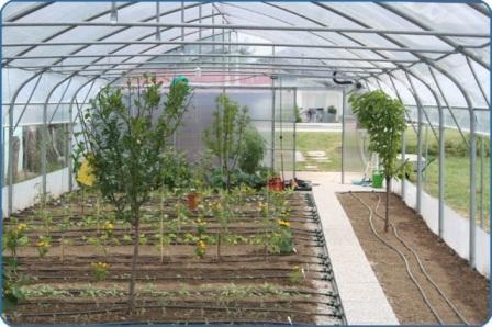 Vrtni rastlinjak