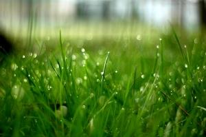 Kapljično zalivanje vrta z namakalnim sistemom