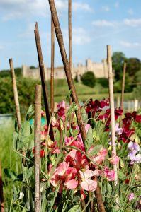 Namakalni sistem za vrt
