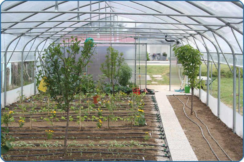 namakanje v rastlinjakih s kapljičnim sistemom