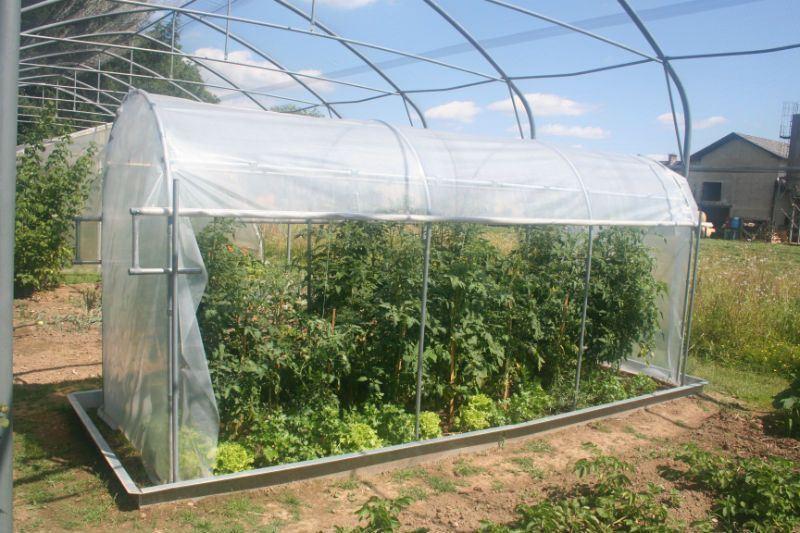 rastlinjak paradižnik ali južne rastline