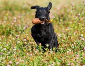 Prehrana psa