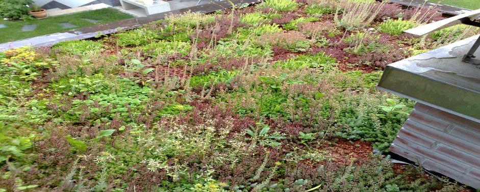 Zelena streha