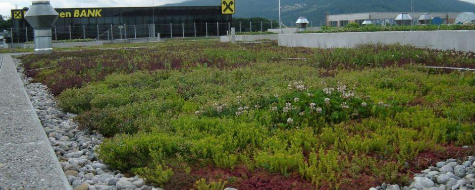 Ozelenitev terase z zelenimi strehami
