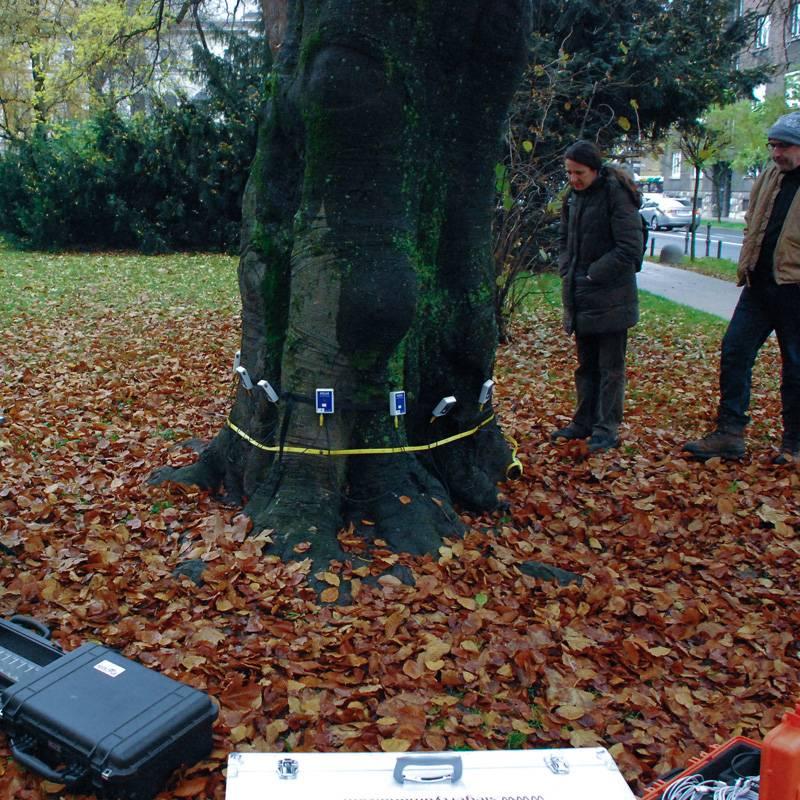 Arboristika in negovanje dreves