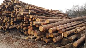 Prodaja lesa