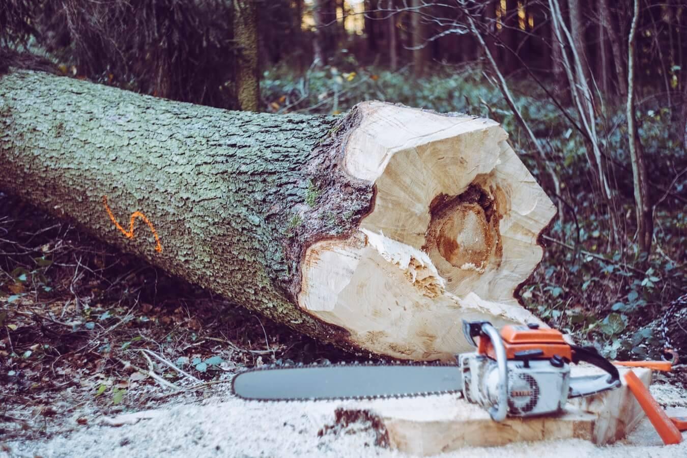 Posek dreves