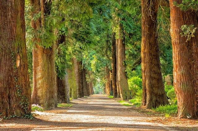 Drevesa so vir življenja