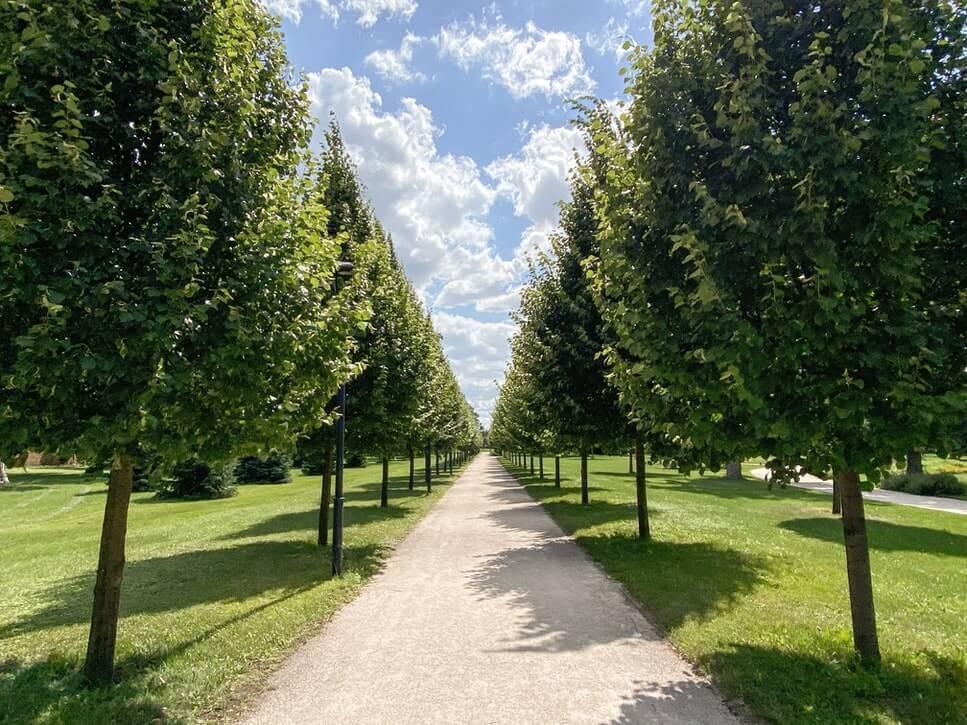 Drevje za parke