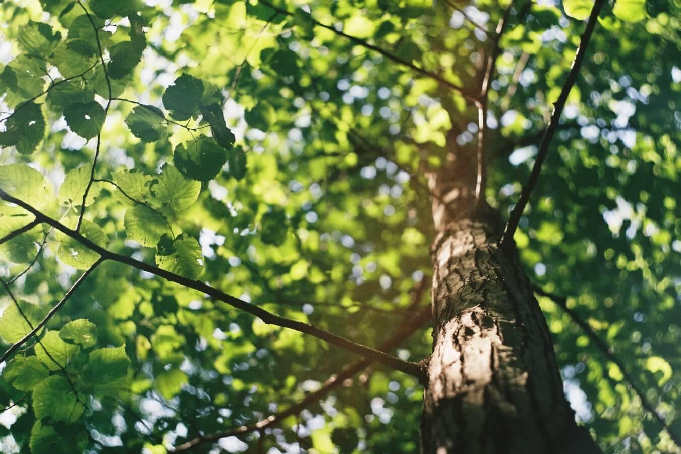 Urejanje vrta in sajenje okrasnih dreves