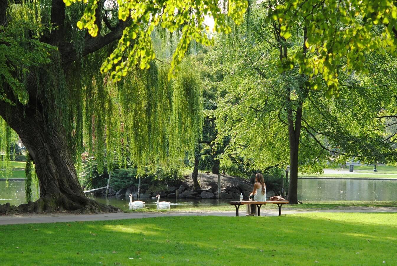 Drevesa za parke
