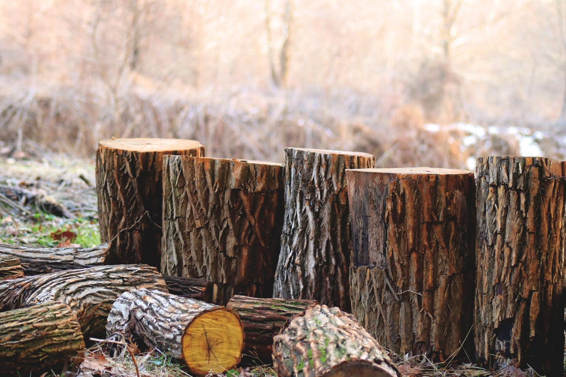 posekana drva