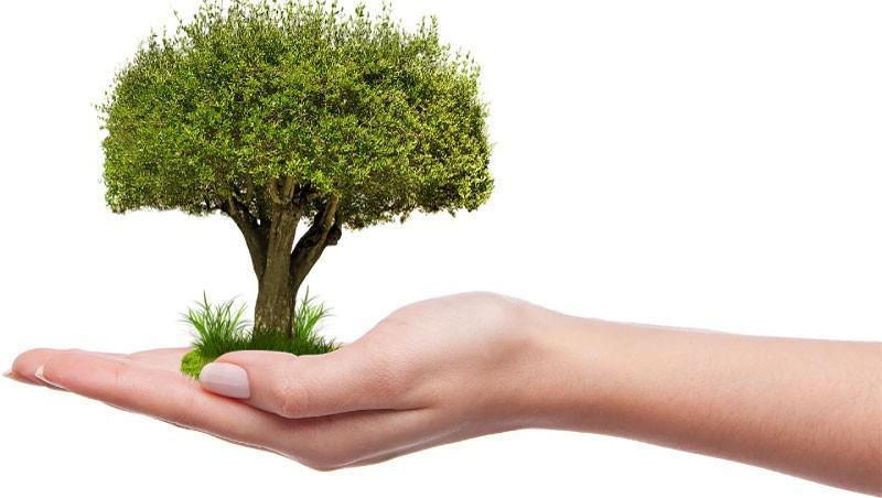 Gojenje, obrezovanje in zasaditev dreves v podjetju Tisa