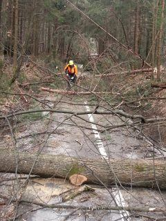 Gozdarske storitve