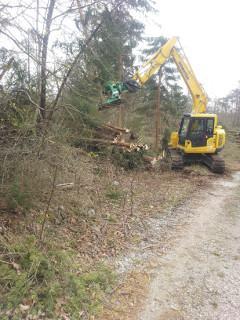 Gozdarstvo v podjetju Tisa