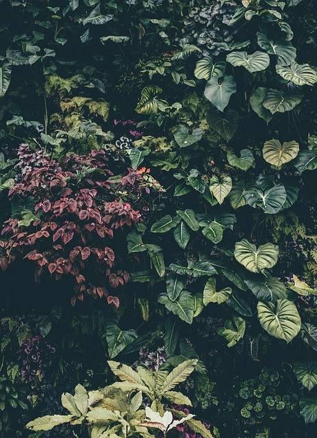 Grmovnice na vašem vrtu