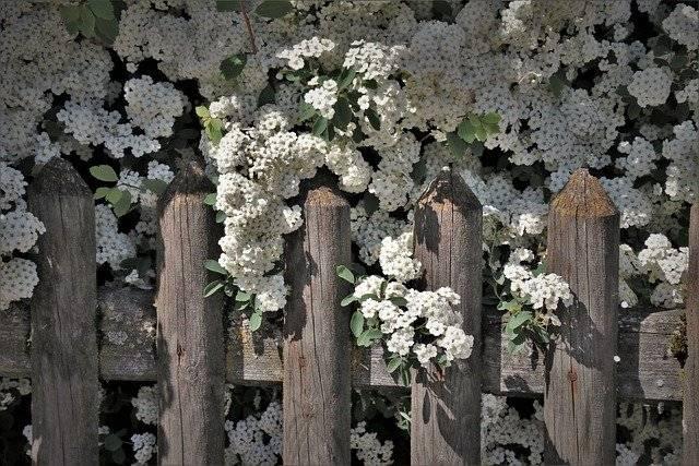 Obrezovanje cvetočih grmovnic