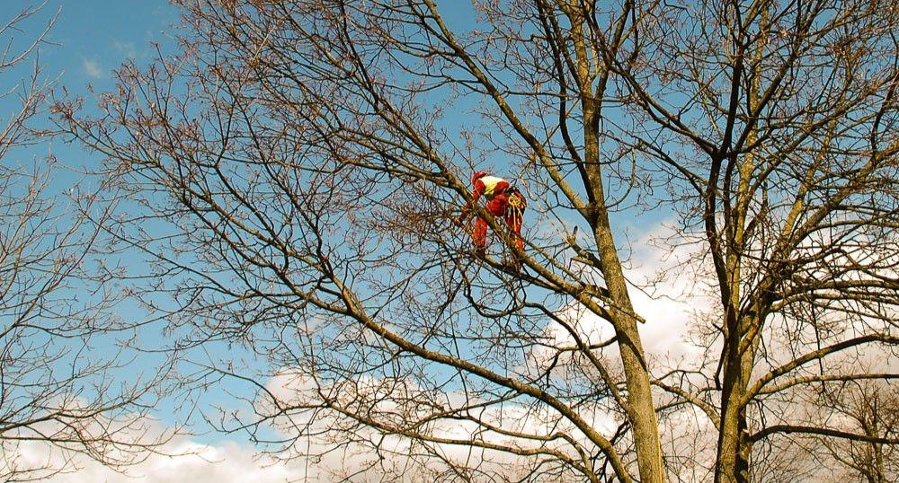 Psek in obrezovanje dreves
