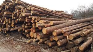 Odvoz in spravilo lesa