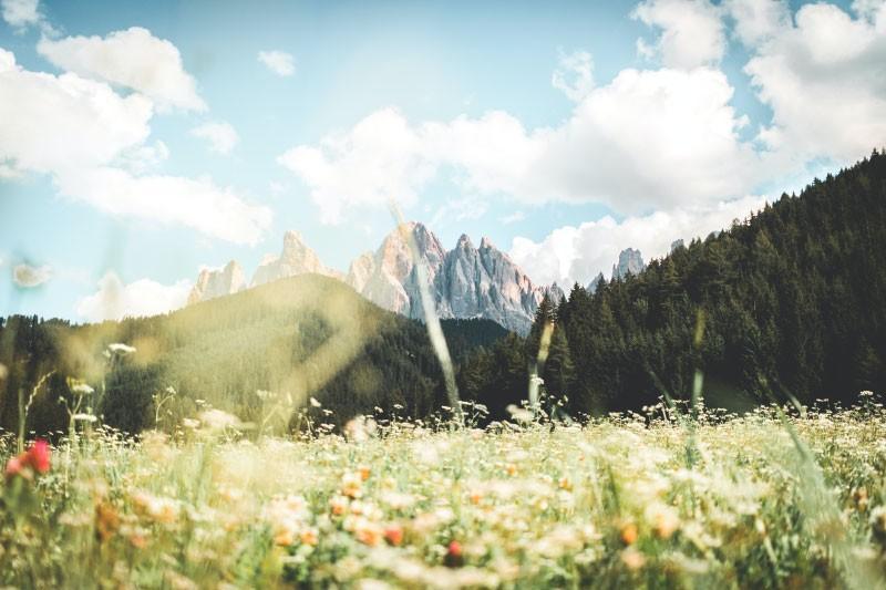 Mulčenje travniških površin za prepričev krčenja travnikov