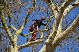 pravilno podiranje dreves