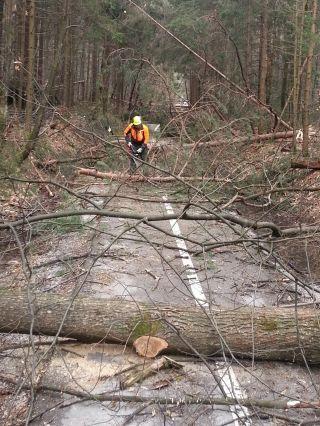 odkup odpadnega lesa