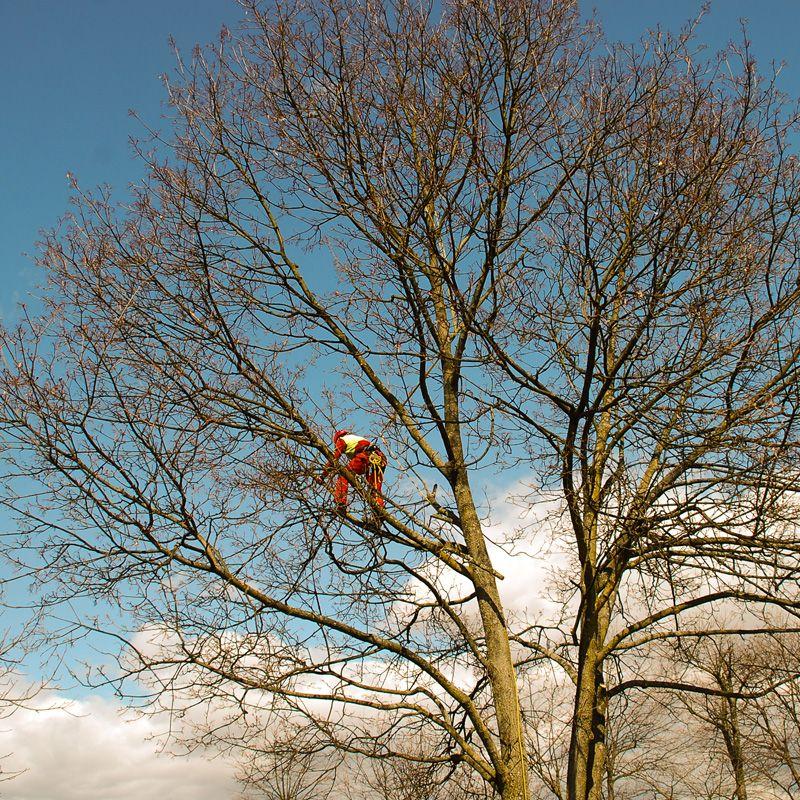 sadno drevje obrezovanje