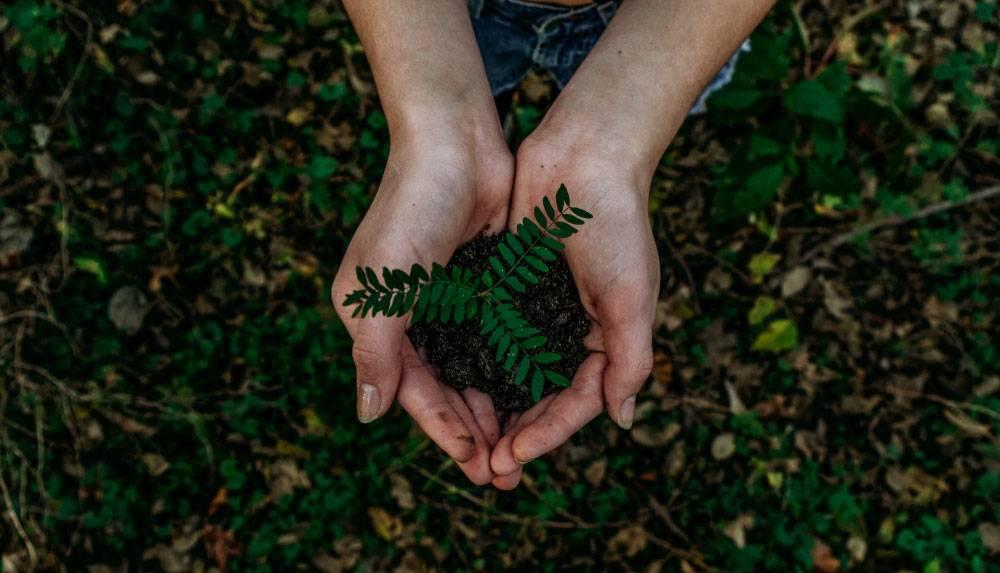 Sajenje okrasnih dreves