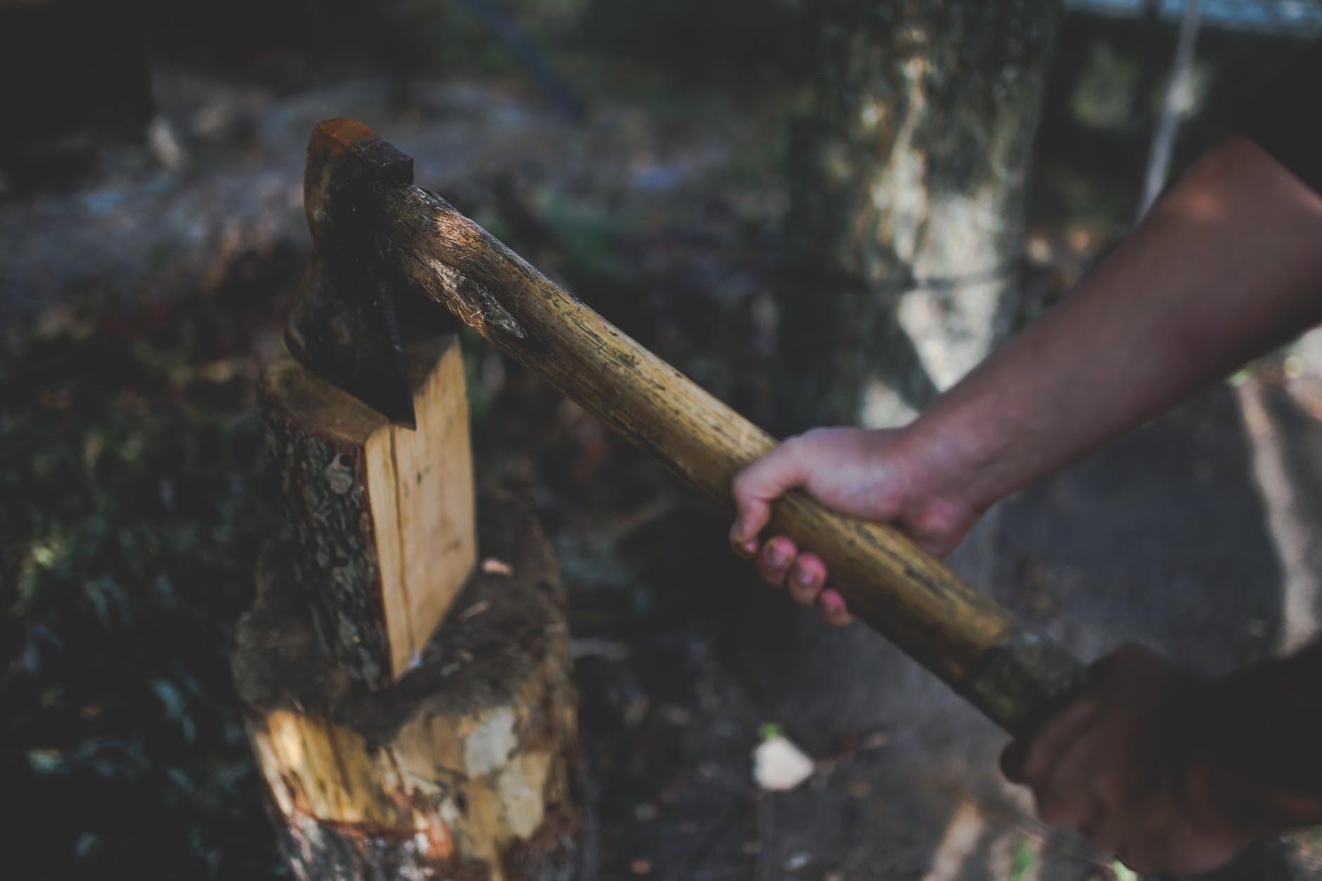sekanje gozdov