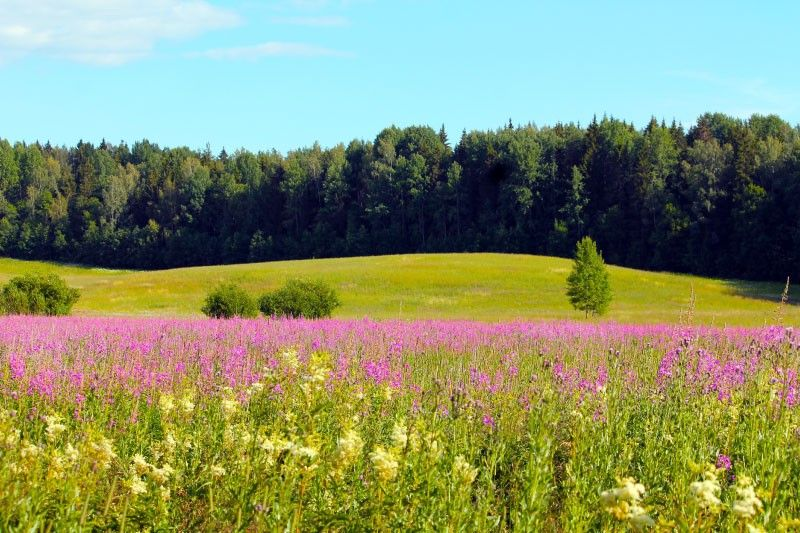 Preprečitev zaraščanja travnikov