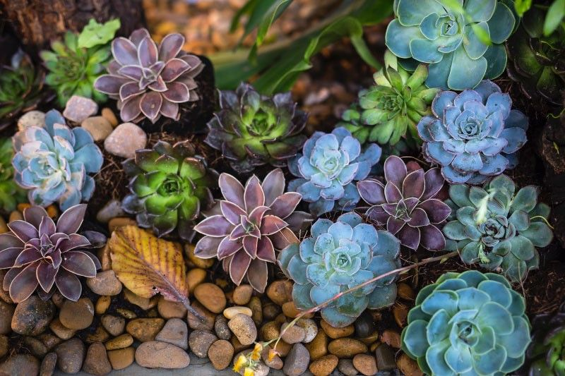 Različne zasaditve okrasnih rastlin