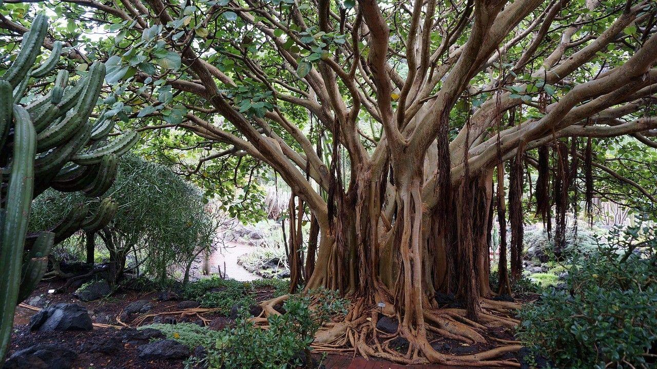 Okrasna drevesa in grmi