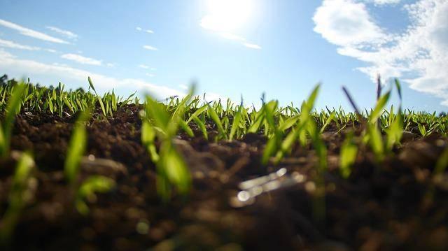 Izdelava zelene strehe - izbira rastlin