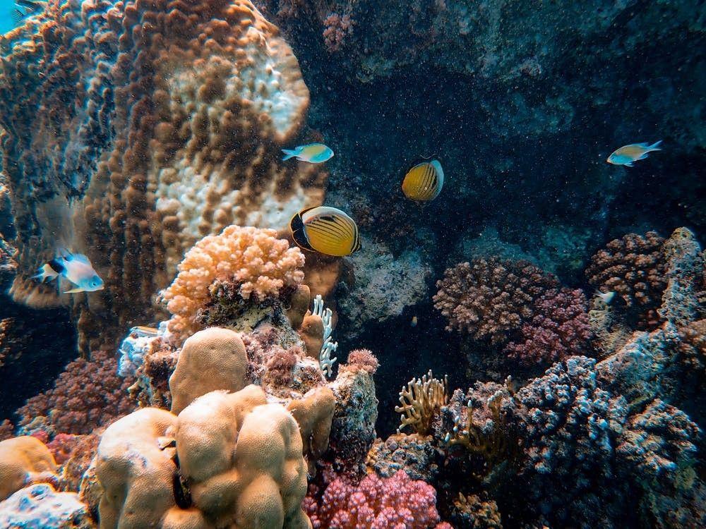Rdeče morje Egipt