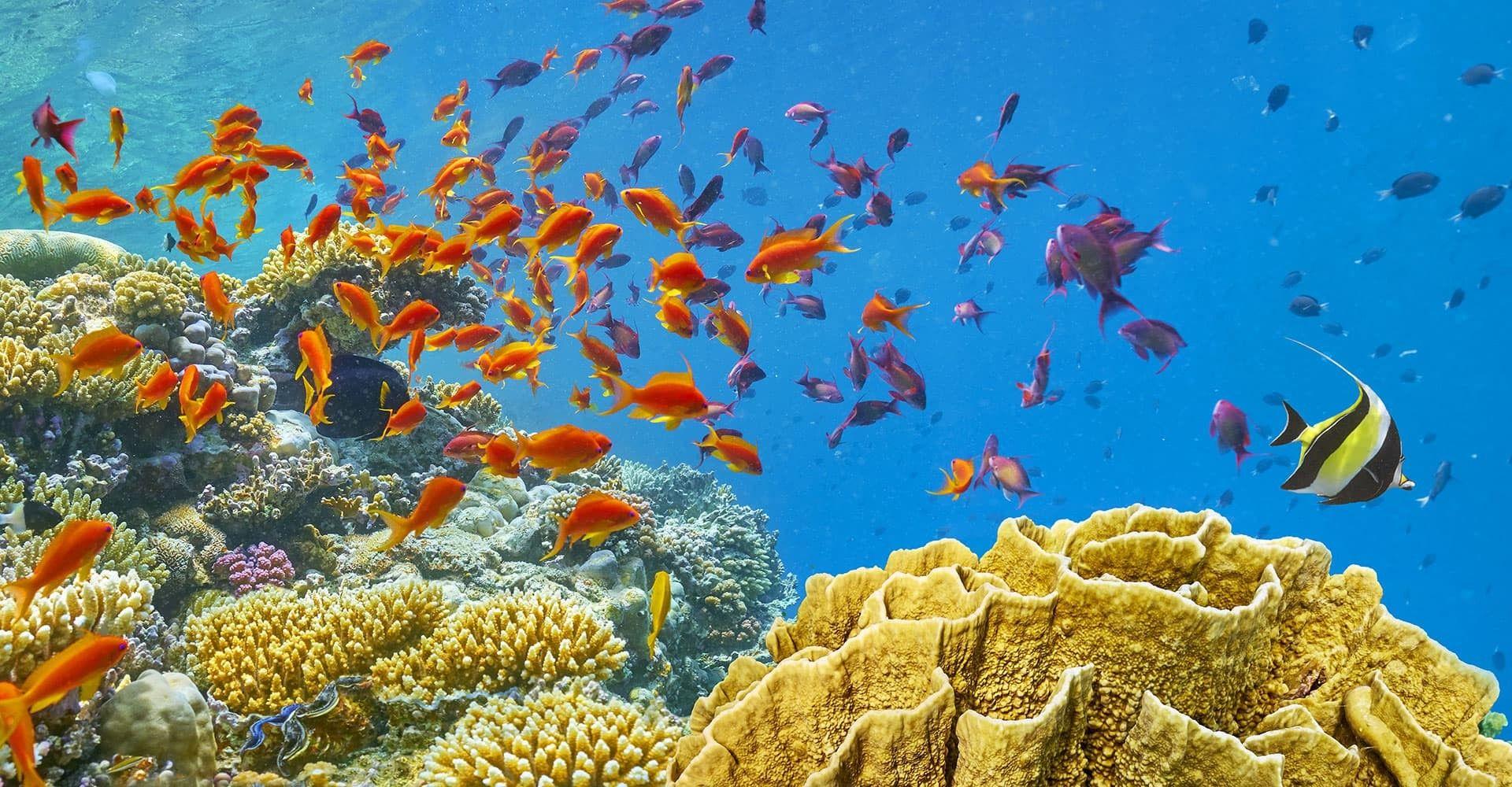 Počitnice v Egiptu in ogled podvodnega sveta