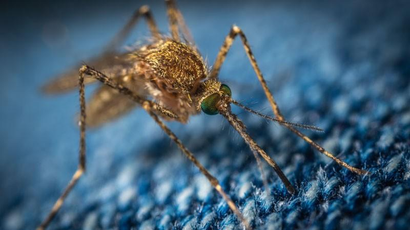 S komarniki za okna in vrata bo vaše poletje mirno
