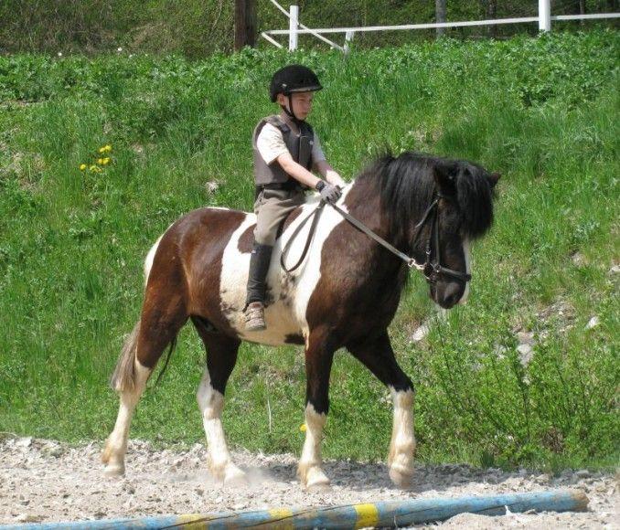 Konji za jahanje