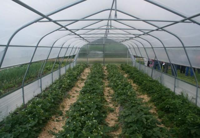 Ponudba UV folij za rastlinjake