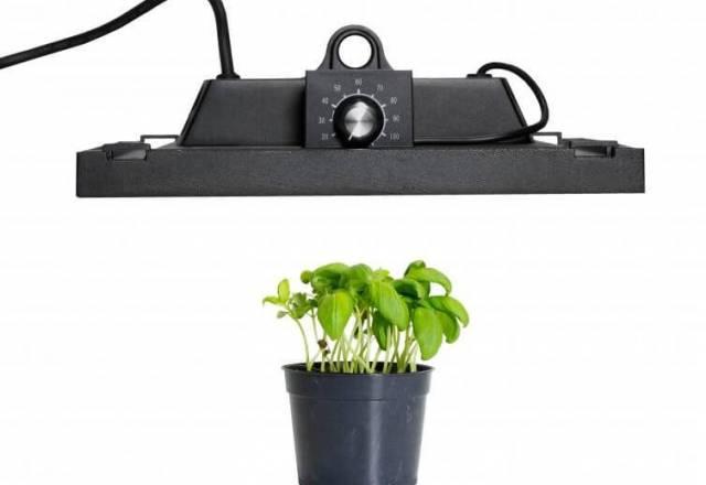 Luči za rastline